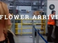 Flower Arrives at United Cargo Terminal